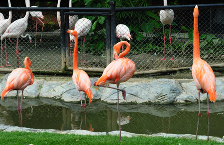 straddle: Flamingos stand in the water Stock Photo