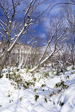Snow in the forest Noboribetsu onsen snow winter national park in Jigokudani, Hokkaido, Japan Stok Fotoğraf