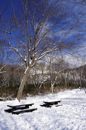Snow and bench in the walkway forest Noboribetsu onsen snow winter national park in Jigokudani, Hokkaido, Japan