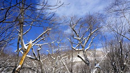 Snow and forest Noboribetsu onsen snow winter national park in Jigokudani, Hokkaido, Japan Stok Fotoğraf