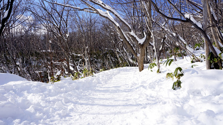 Snow and walkway in the forest Noboribetsu onsen snow winter national park in Jigokudani, Hokkaido, Japan