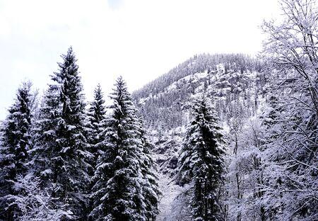 Hallstatt invierno nieve paisaje de montaña el bosque de pinos en el valle de las tierras altas conduce a la antigua mina de sal de Hallstatt en día de nieve, Austria