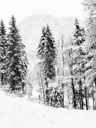 Monochrome Hallstatt trekking Winter snowing in the mountain landscape and the pine forest vertical in upland valley leads to the old salt mine of Hallstatt, Austria