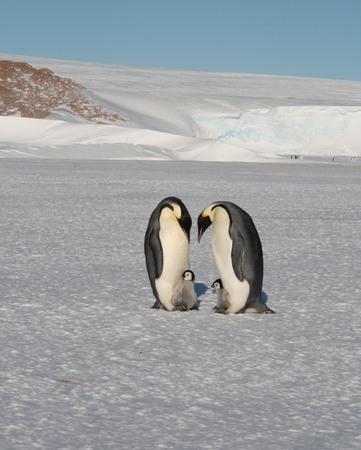 penguins in Antarctica on ice Stock Photo