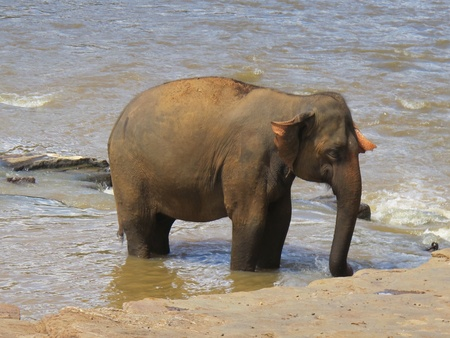 Elephant play in the water