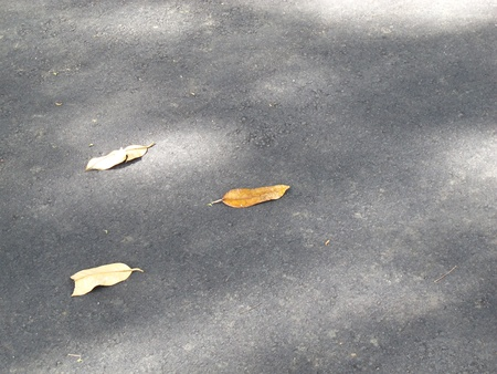 Falling leaves on the way