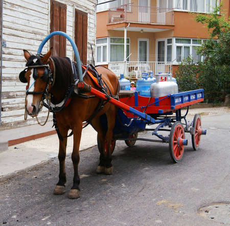 blinder: horse and carriage transport gas and water