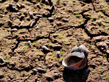 The ground under the lake in the hot weather was made the water in the lake was dry and cause to the shell and small living thing were dead. Banco de Imagens - 110681479