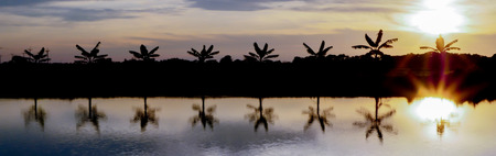 Silhouette picture of the banana tree at the waterside of garden with sunset time