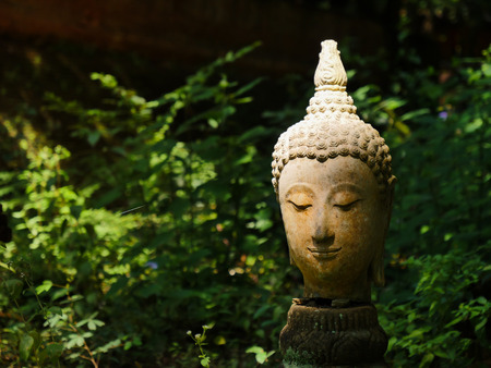 The buddha stone head place in the green forest