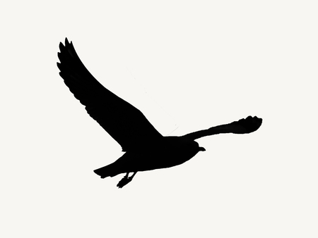 Silhouette picture of seagull bird flying on white backgorund