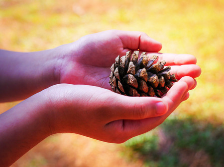 Two hands of the child give the plant seed in the national park with water background