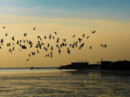 The group of the seagull were flying at the beach with orange sky background
