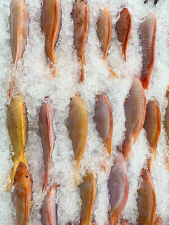 Fresh fish on the ice shelf in super market for sell