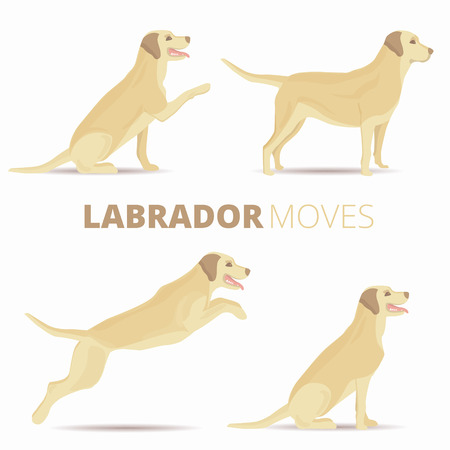 labrador: Set of labrador dog breed in various poses isolated. Vector retriever moves illustration