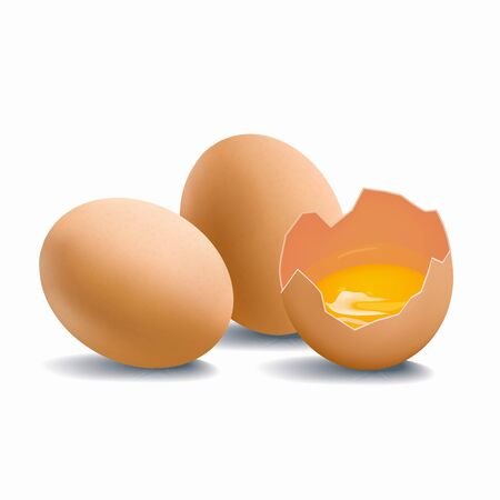 Group of chicken brown eggs isolated on white background. Cracked eggshell with raw yolk vector illustration
