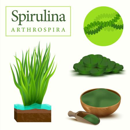 dietary: Set of spirulina algae, tablets, pills, powder and cells. Arthrospira seaweed dietary supplement image. Superfood vector illustration