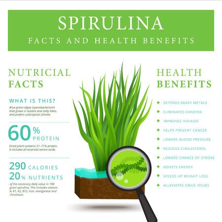 Set of spirulina algae infographics banner. Arthrospira seaweed dietary supplement background template. Superfood vector illustration Illustration