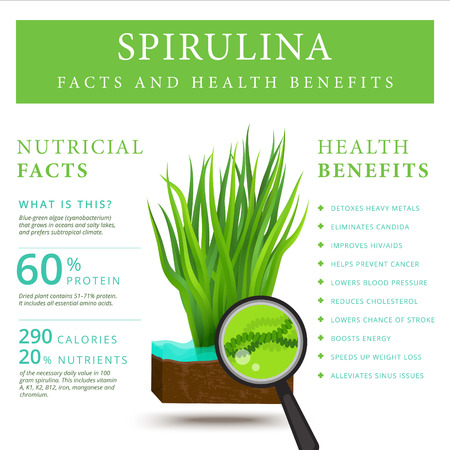 Set of spirulina algae infographics banner. Arthrospira seaweed dietary supplement background template. Superfood vector illustration Vettoriali