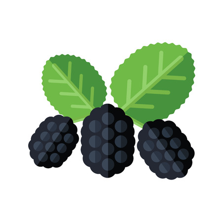 Mulberry berries and leaves vector illustration. Superfood morus or moraceae icon. Healthy detox natural product. Flat design organic food. Çizim