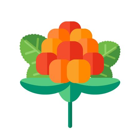 wildberry: Cloudberry with leaves vector illustration. Superfood creeping raspberry icon with yellow orange berries. Healthy detox natural bakeapple or salmonberry. Flat design organic food.