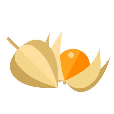 Physalis bessen en bladeren vector illustratie. Superfood groundcherries pictogram. Gezond detox natuurlijk product. Platte ontwerp biologisch voedsel. Vector Illustratie