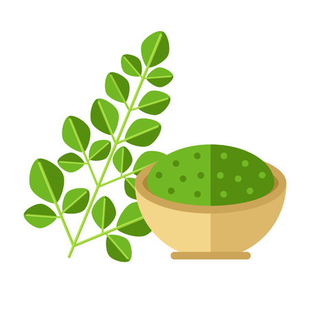 Moringa plant with leaves and seed powder. Vector illustration. Superfood moringaceae family icon. Healthy detox natural product. Flat design organic food.