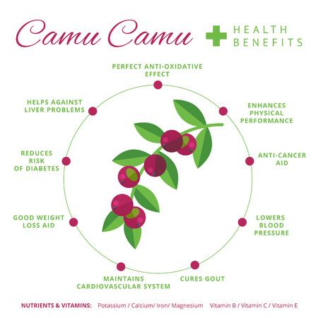 Camu camu ベリー健康と栄養インフォ グラフィック。スーパー フード camucamu フルーツの栄養素とビタミン情報。健康的なデトックス自然製品情報。フ