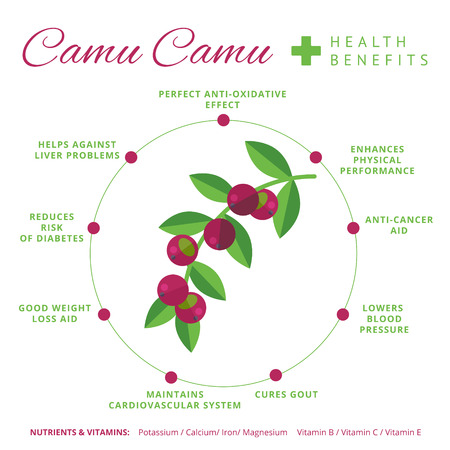 Camu camu berry health benefits and nutrition infographics. Superfood camucamu fruit nutrients and vitamins information. Healthy detox natural product info. Flat vector organic food icon. Çizim
