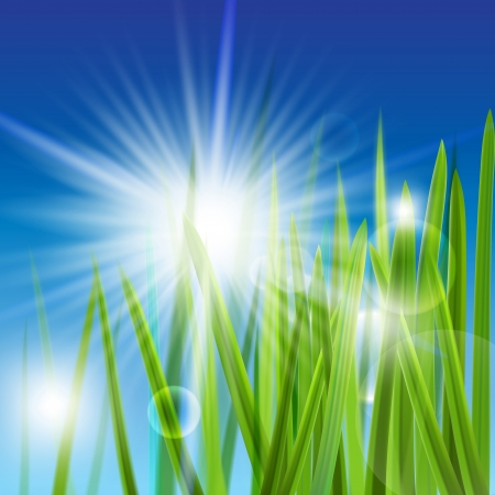 The illustration of beautiful green grass. Vector image.