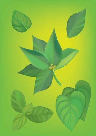 Green leaves Stock Vector - 25206795