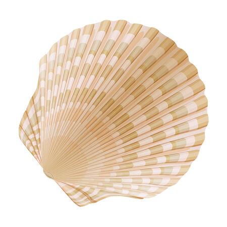 aquaculture: Seashell_a