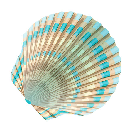mollusc: Seashell_d