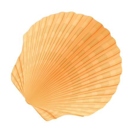 aquaculture: Seashell_c Illustration