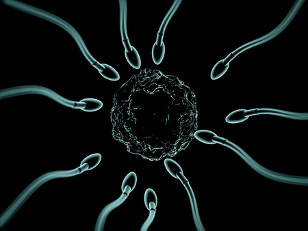 Sperm and egg cell microscopic view. 3D rendering Stock Photo
