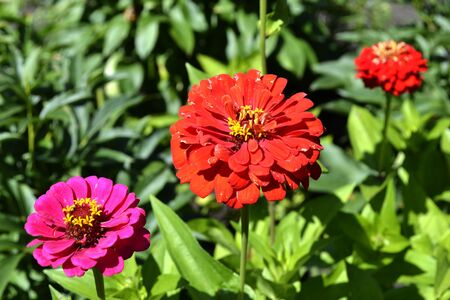 majors: Three flower blooming in the summer garden