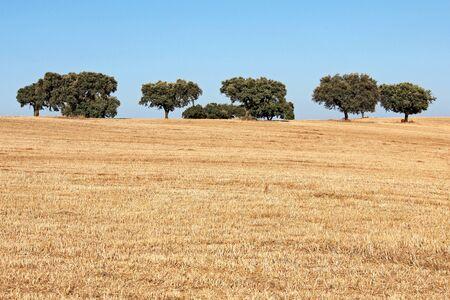 cultivable: Alentejo Portugal