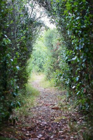 Path surrounded by green vegetation, natural background of real types of plants and leaves