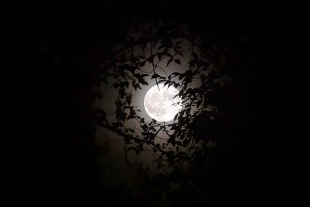 Full moon in the foreground, surrounded by branches and leaves. The harvest moon becomes a space between the surrounding vegetation against the light. Stok Fotoğraf - 132025258