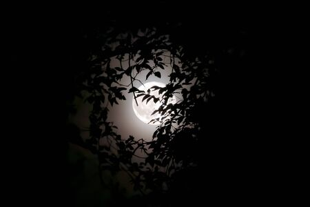 Full moon in the foreground, surrounded by branches and leaves. The harvest moon becomes a space between the surrounding vegetation against the light.
