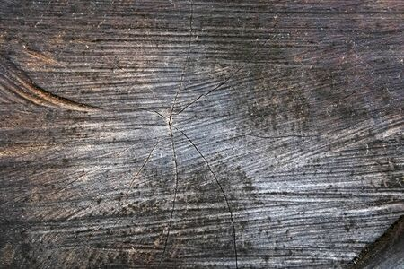 The wood rings, the grain and the structure of the wooden logs. Close up of the section of a cut tree trunk