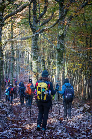 Group of hikers walks in the beech forest on an autumn trek. Stok Fotoğraf