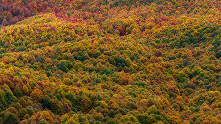 Beech forest in autumn. Expanses of trees with leaves in orange, red, yellow and green colors, Suitable for background or multicolored texture.