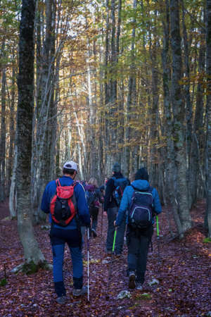 Group of hikers walks in the beech forest on an autumn trek. Editöryel
