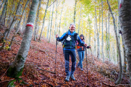 Hikers in the beech forest during the autumn season, the man and the woman descend a path covered with dry leaves.
