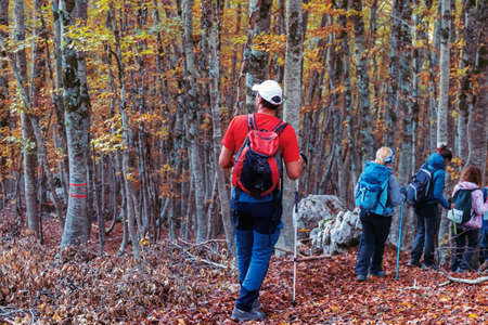 Hikers in the beech forest during the autumn season, group of people descend a path covered with dry leaves.