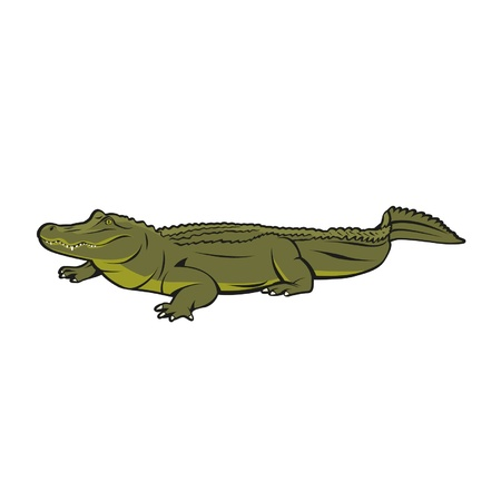 The vector illustration of realistic and also a little bit happy crocodile  Иллюстрация