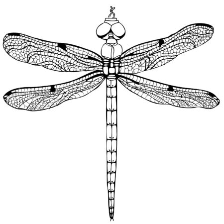 dragonfly wings: dragonfly