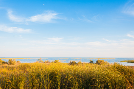 A golden field of reeds in front of a lake of aquamarine color. Blue sky with sparse clouds. Background, landscape, seascape