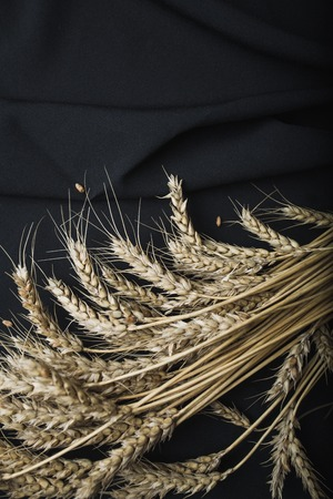 Autumn still life from ears of wheat on a black fabric background